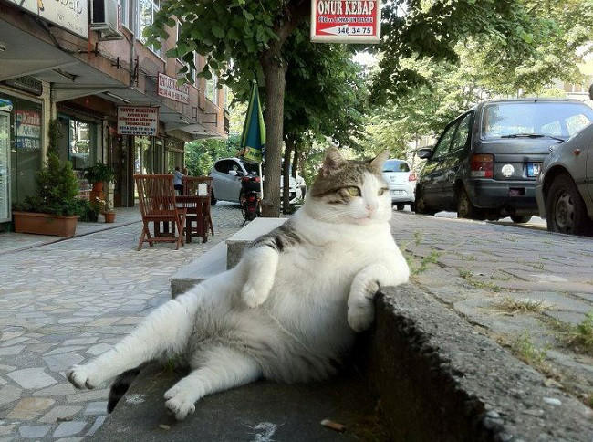 Istanbul's famous chilled out cat Tombili