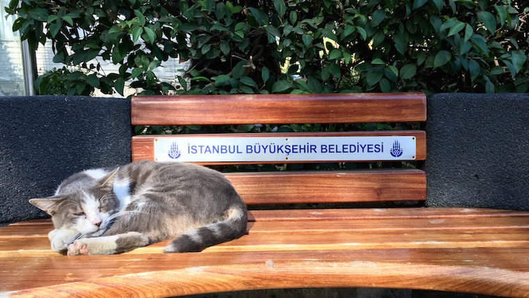 A cat snoozes on a bench in Istanbul