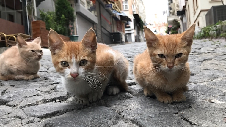 Three kittens hanging out in Istanbul