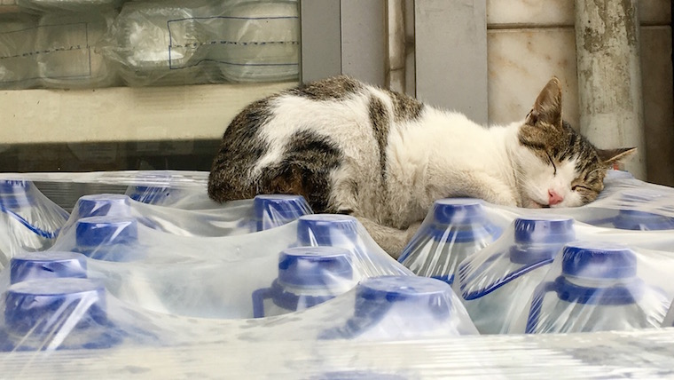 A cat snoozes on packs of water bottles, Istanbul